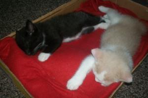 kitties 001