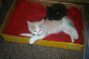 kitties 002