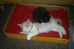 kitties 003