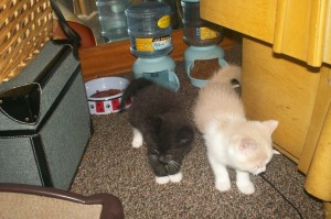 kitties 015