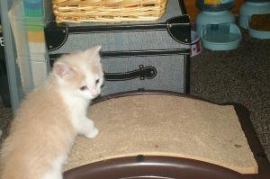 kitties 027