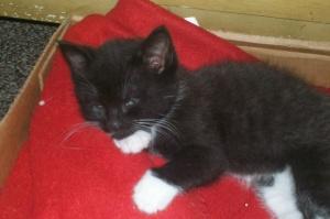 kitties 030