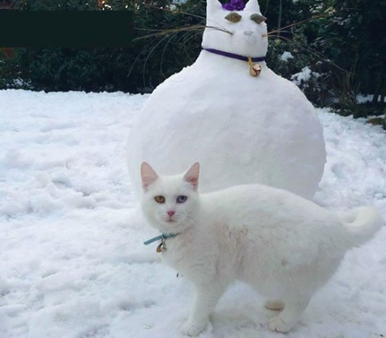 pet-snow-sculptures-4__605